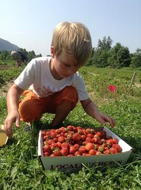 Picking berries at Last Resort Farm