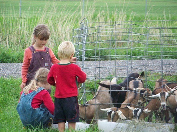 Open Farm Week - COURTESY IMAGE