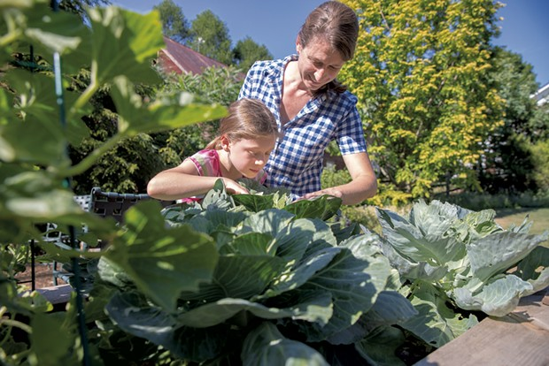 Stacy and Mavis inspect cabbage. - JAMES BUCK