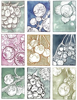 Neddo's drawings of berries using ink made from each berry - COURTESY OF NICK NEDDO