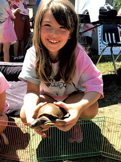 Taking care of box turtle Carmen at Camp Paw Paw - COURTESY OF CHITTENDEN COUNTY HUMANE SOCIETY