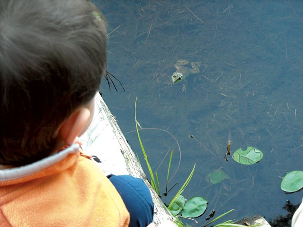 Follow the croaking sounds to find frogs - COURTESY OF BEN WANG