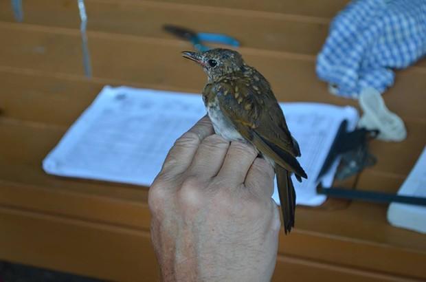 Audubon Vermont - COURTESY