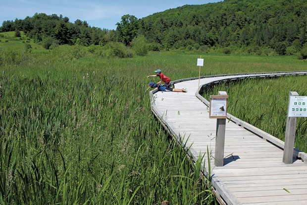 Jesse and Noah explore the wetlands from the boardwalk - HEATHER FITZGERALD