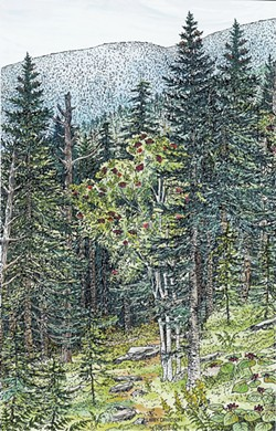An illustration of a montane spruce-fir forest from Wetland, Woodland, Wildland - LIBBY DAVIDSON