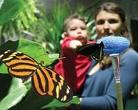 Butterflies, Live at ECHO