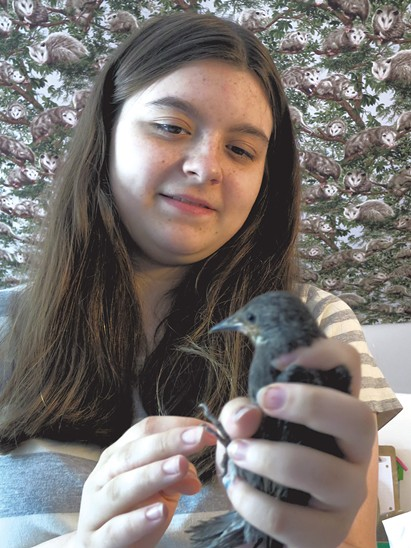 Safe and Sound Wildlife Rehabilitation