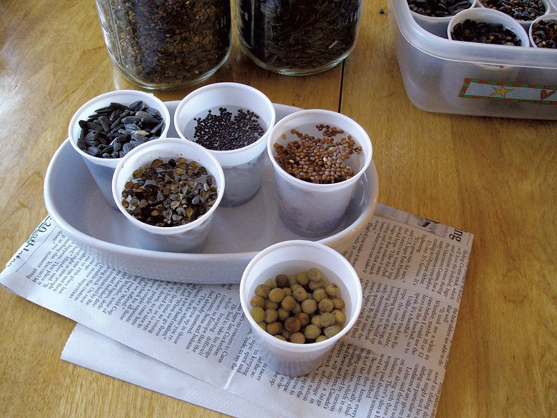 Soaking seeds - COURTESY OF PETER BURKE