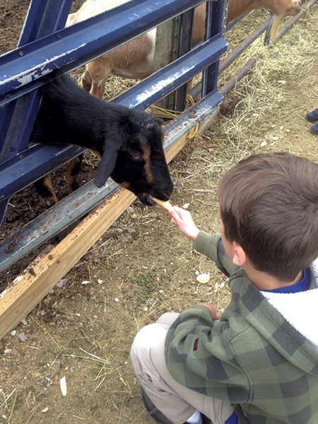 Feeding a goat in the Petting Paddock - JOY CHOQUETTE