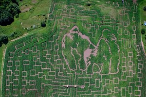 Navigating Corn Mazes