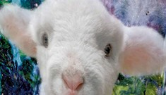 Literary Lamb Sweet Pea Returns