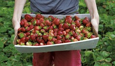 Pick Your Own at 10 Vermont Berry Farms