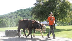 Ahead of the Herd: A Young Teamster Masters an Old New England Tradition