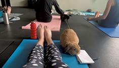 Rabbit Pose: A Mother-Daughter Yoga Session With Bunnies Afoot