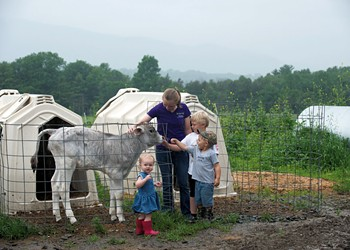 Brought Up in the Barn: Hard Work, Fresh Air and Freedom Define Life for Dairy Farm Kids