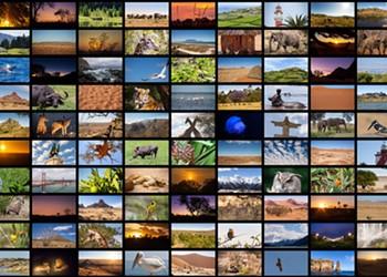 Nature Documentaries to Watch This Winter