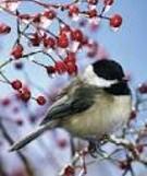 Bird-Monitoring Walk