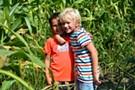 A Corn Maze Adventure
