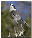 Fall Migration Bird Walk