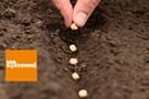 Saving Seeds for Kids