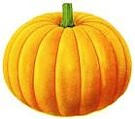 Sam Mazza's Giant Pumpkin Weigh-In
