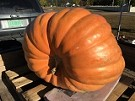 Milton Giant Pumpkin Growing Contest