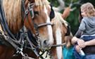 Heritage, Harvest & Horse Festival