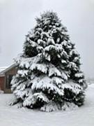 Milton Holiday Tree Lighting