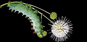 caterpillar-lab-704x345.jpg