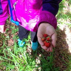 csm_wild_strawberries_418b72b3b7.jpg