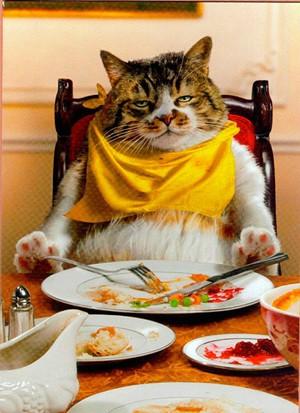 cat_eating_thanksgiving_dinner.jpg