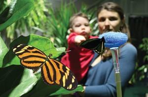 butterflies_mom_child.jpg