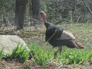 turkey_visit08.jpg