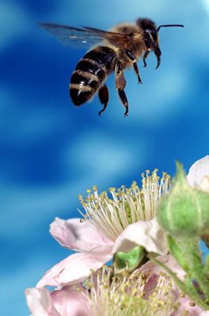 bee_flower-3.jpg