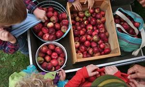 apples-button-200x120.jpg