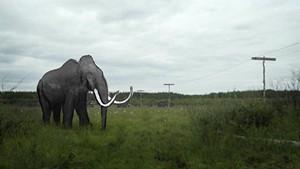 mf17-still-mammoth3.jpg
