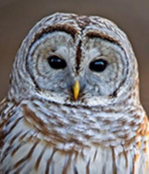 owl-prowl-feb15-web.jpg