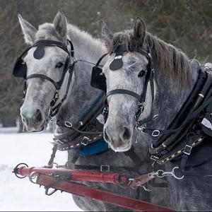 show44-january-february-weekend-sleigh-rides-2017.jpg