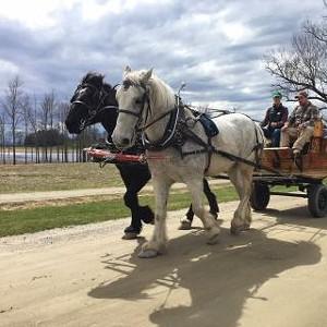 horse-drawn_wagon_rt.jpg