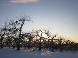 champlain_orchards.jpg