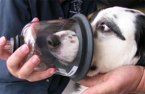 A demonstration of how pet oxygen masks work