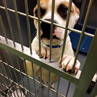 Memphis Animal Services Begins Adopting Out Dogs From Stray Area