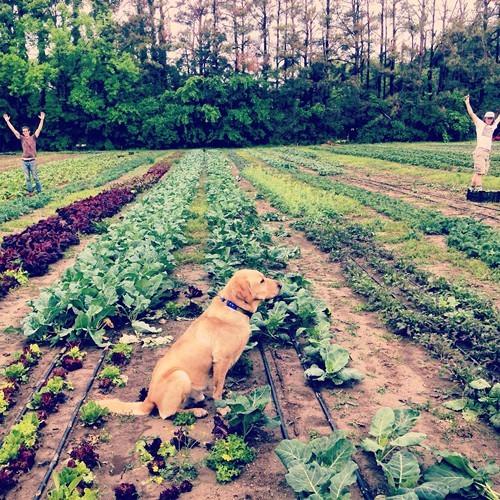 A scene from Delta Sol Farm