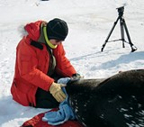 Alex Eilers spent six months in Antarctica researching seals.