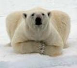 polar_jpg-magnum.jpg