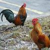 Bill Increasing Animal Fighting Penalties Passes Tennessee Legislature