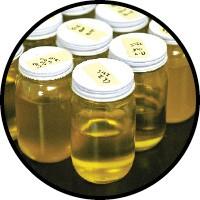 Biodiesel ready for testing - JUSTIN FOX BURKS