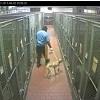 Blogger Receives Warning Letter Regarding Animal Shelter