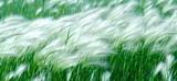 breeze_jpg-magnum.jpg