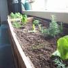 Breakroom Garden 2